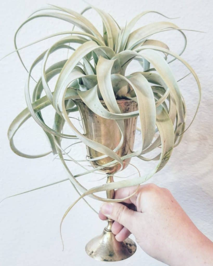 air plant in the small shop top ten gifts for moms
