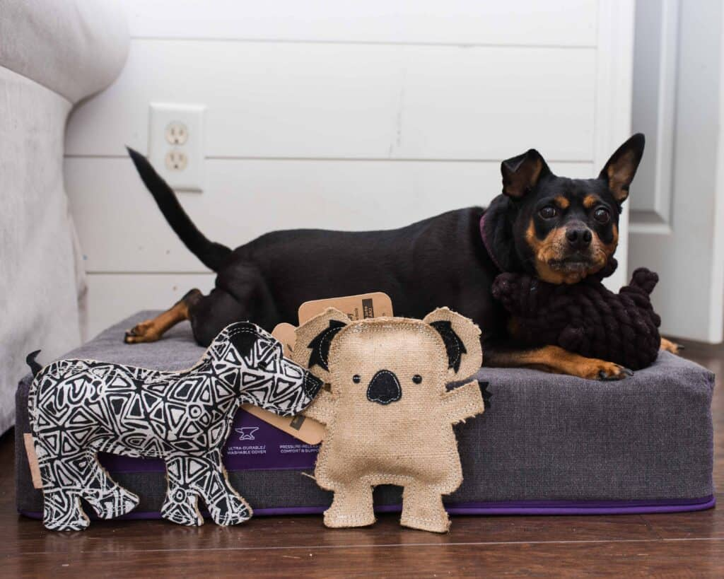 outback tails ecofriendly gifts for dogs