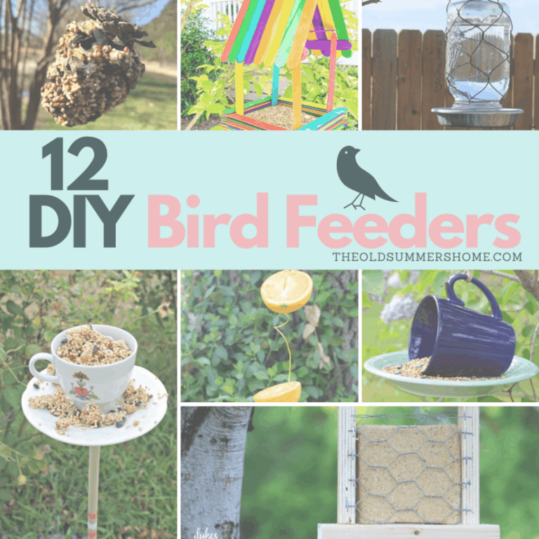 12 Easy DIY Bird Feeders to Make Today
