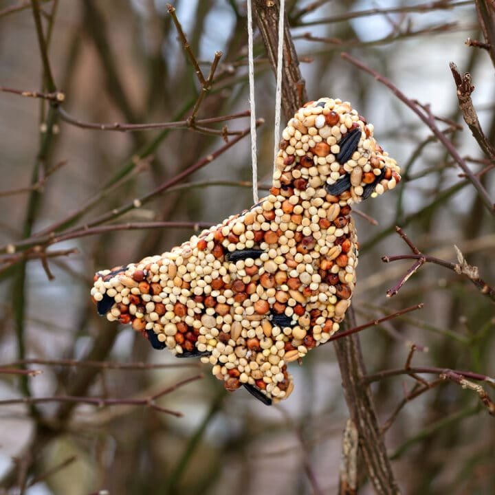 Bird feeder ornaments made with birdseed and cut into fun shapes with cookie cutters.
