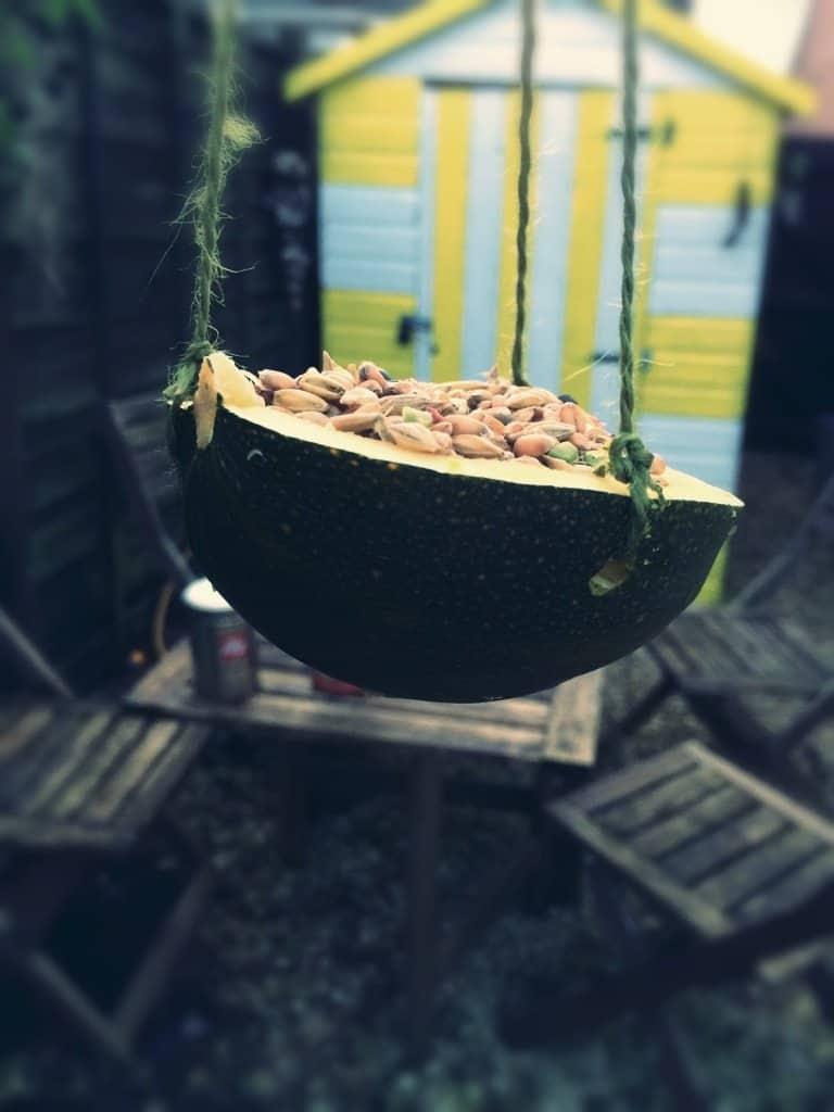 Natural bird feeder made from a squash.