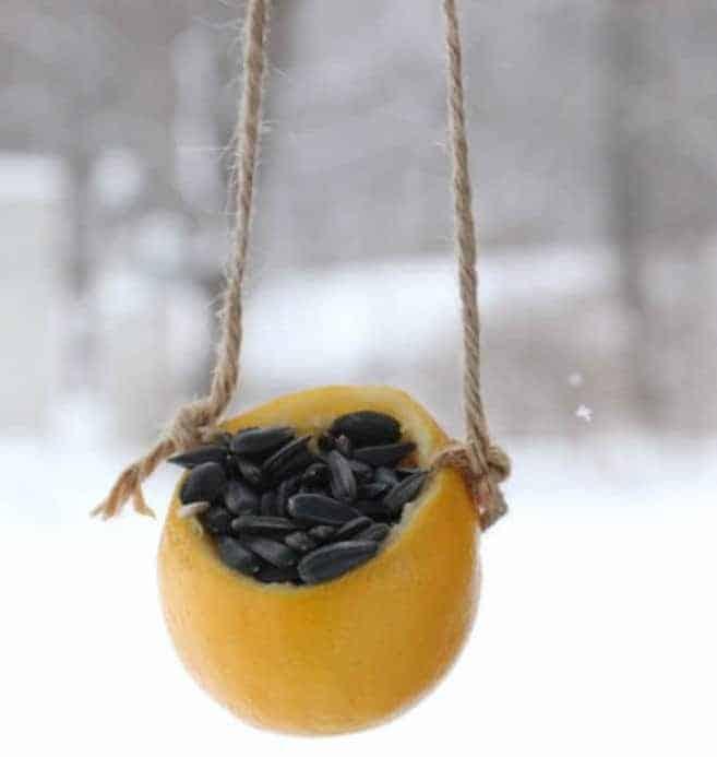simple citrus bird feeder