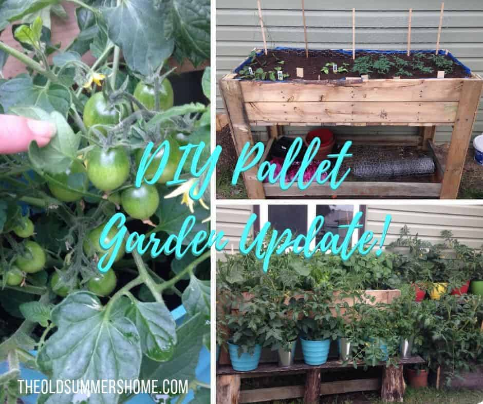 DIY pallet garden update