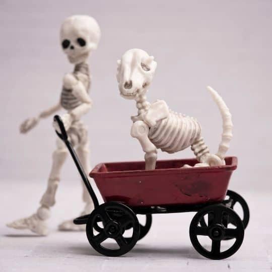 funny skeleton puns